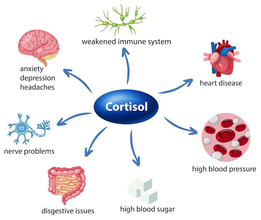 記憶力低下 ストレスによるコルチゾールの増加